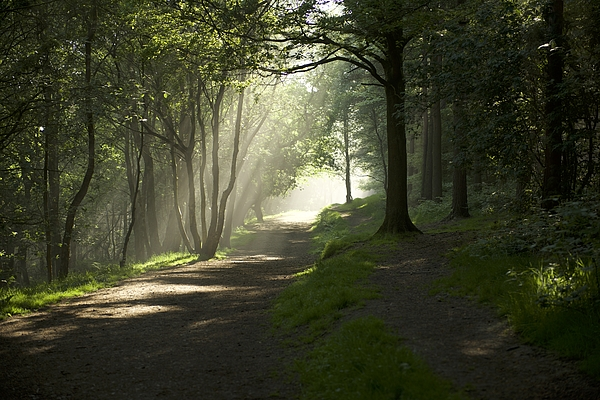 Forrest Of Light Photograph by Clayborough Photography