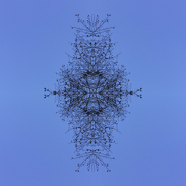 Kaleidoscopic Image of Winter Tree branches Photograph by Mike Hill
