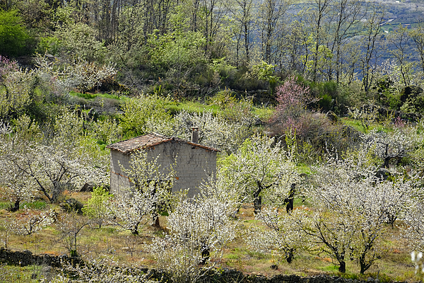 Rustic House In Jerte Valley Photograph by Carlos Sanchez Pereyra