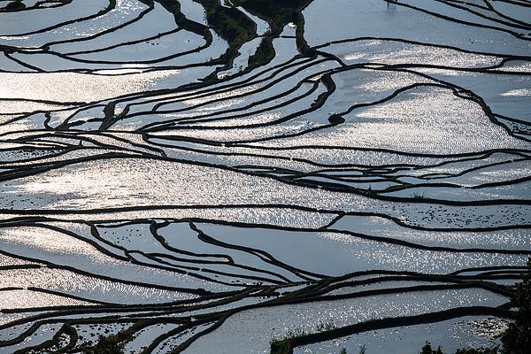The Beautiful Terrace Line Photograph by Zhouyousifang