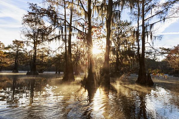 USA, Texas, Louisiana, Caddo Lake, Benton Lake, bald cypress forest Photograph by Westend61