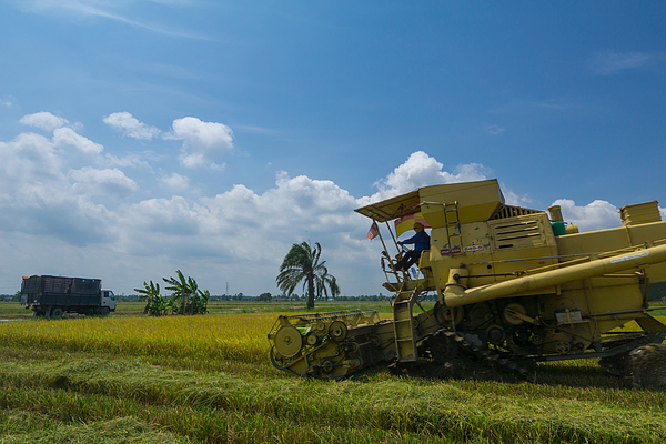 Farmer Uses Machine To Harvest Rice On Paddy Field In Sabak Bernam On July, 2017. Sabak Bernam Is One Of The Major Rice Supplier In Malaysia. Photograph by Shaifulzamri