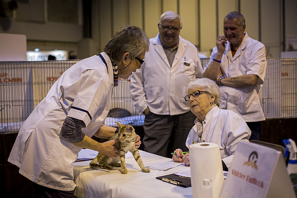 The Feline World Gathers For The Supreme Cat Show 2015 Photograph by Rob Stothard