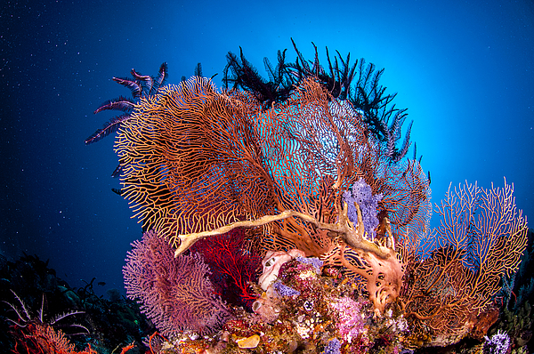 The underwater world of Java Sea, Gili Islands, Lombok, Indonesia. Photograph by Giordano Cipriani