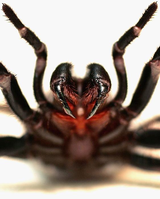 Australias Deadliest Animals Photograph by Ian Waldie