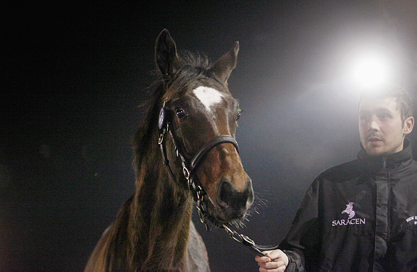 Four Foals From Legendary Racehorse Frankel Auctioned At Newmarket Photograph by Mary Turner