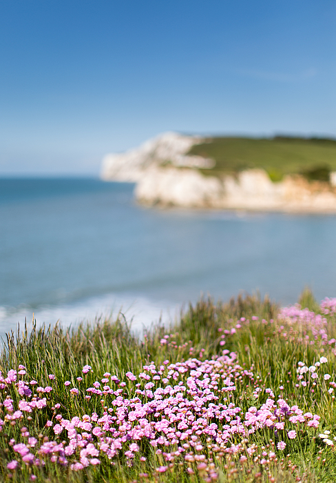 50mm of Freshwater Bay Pinks Photograph by s0ulsurfing - Jason Swain