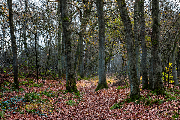 A Bunch Of Trees Photograph by William Mevissen