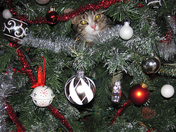 A cat on a Christmas Tree! Photograph by Federica Grassi