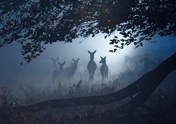 A group of deer in a misty forest. Photograph by Alex Saberi