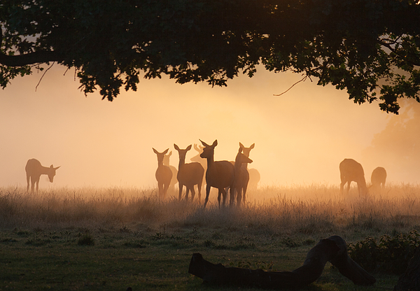 A group of deer in the mist. Photograph by Alex Saberi