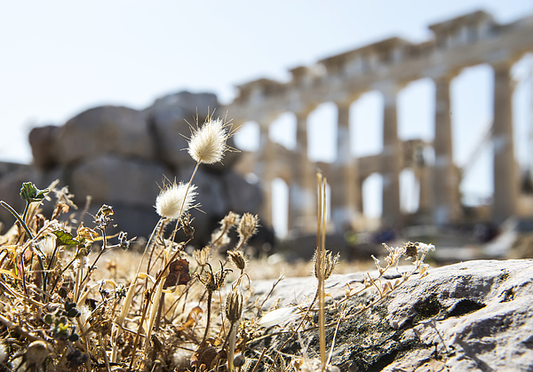 A New Life On The Ruins Photograph by Lsp