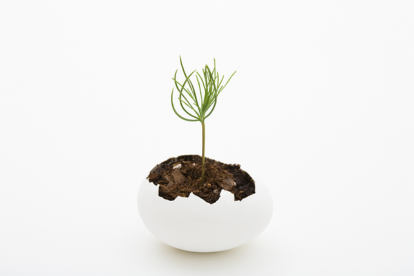 A seedling growing from an eggshell Photograph by Diane Macdonald