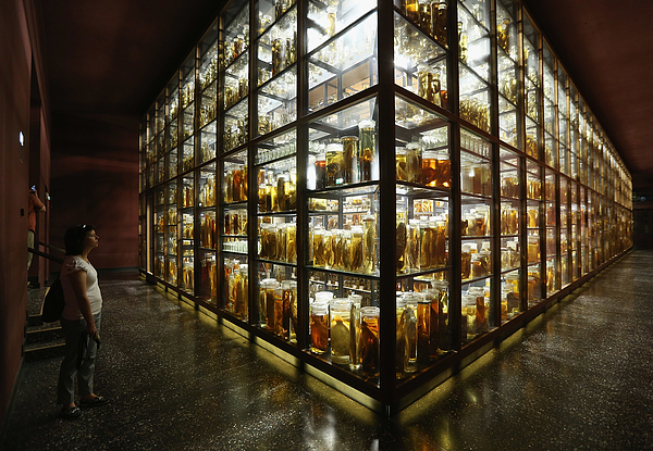 A Spectacle Of Specimens Highlights Natural History Museum Collections Photograph by Sean Gallup