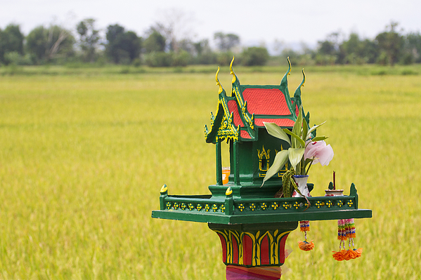 A Spirit House in a rice field Photograph by Jean-claude Soboul