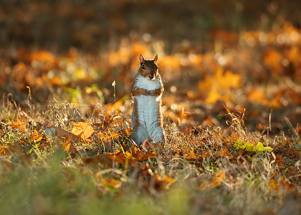 A squirrel stands up. Photograph by Alex Saberi