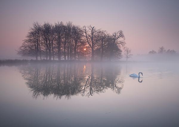 A swan on a misty lake. Photograph by Alex Saberi