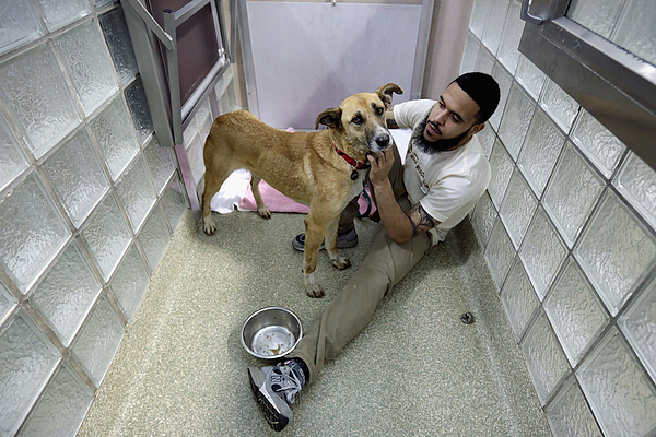Abandoned Dogs Rescued From Sochi Arrive At Washington DC Rescue Shelter Photograph by Chip Somodevilla