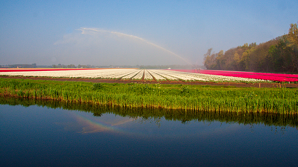 Acres of blooming flowers during spring in the Netherlands Photograph by Flottmynd
