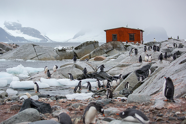 Antarctica: Petermann Island Photograph by Goddard_Photography