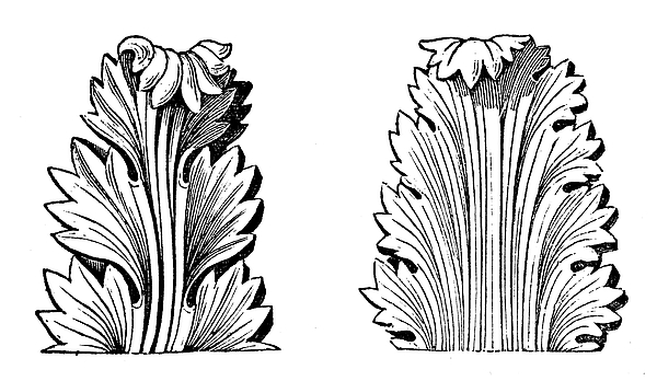 Antique Illustration Of Greek Acanthus (ornament) Drawing by Ilbusca