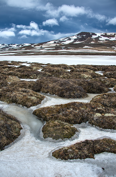 Artic Vegetation And Snow Pattern In The Foreground And Snowy Mountains In The Background Photograph by Fibru Photography