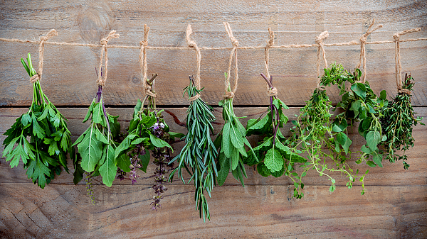 Assorted hanging herbs ,parsley ,oregano,mint,sage,rosemary,sweet basil,holy basil,  and thyme for seasoning concept on rustic old wooden background. Photograph by Kerdkanno