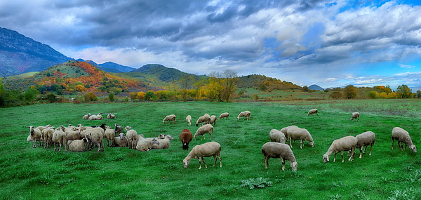 At the pastures of Prinos panorama 3 Photograph by Photo By Dimitrios Tilis