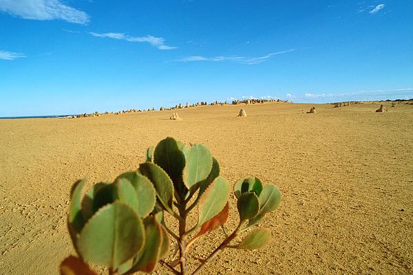 Australia, Pinnacles Desert Photograph by James Hardy