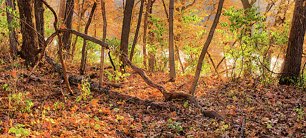 Forest Photograph - Autumn Backlight by Bonfire Photography