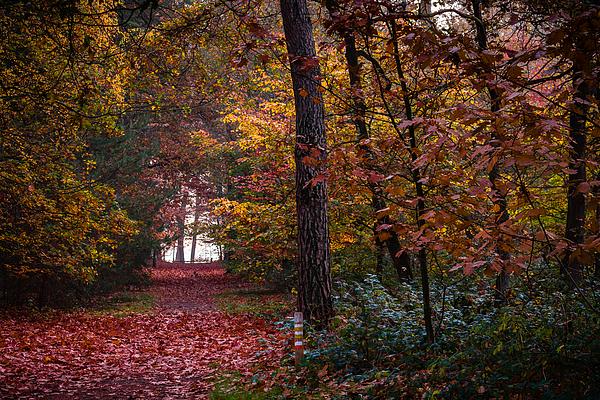 Autumn Palette I Photograph by William Mevissen