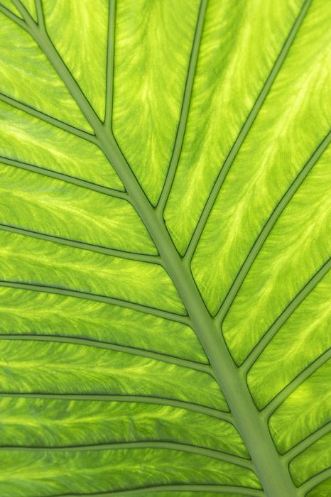 Back lit leaf Photograph by Andrew Dernie