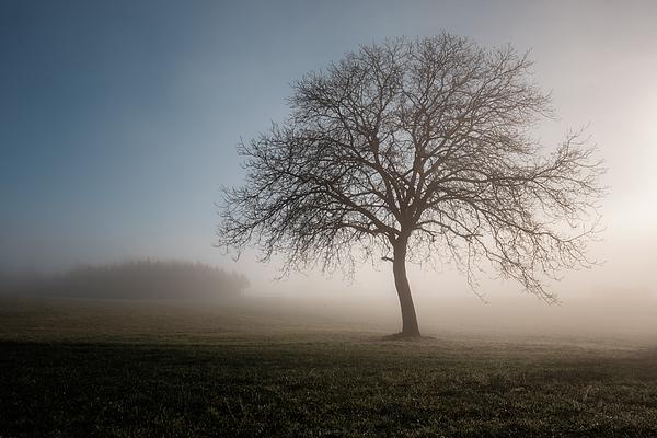 Bare Tree On Field In Foggy Weather Photograph by Matthias Gaberthüel / EyeEm