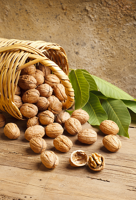 Basketful Of Walnuts Photograph by Syolacan