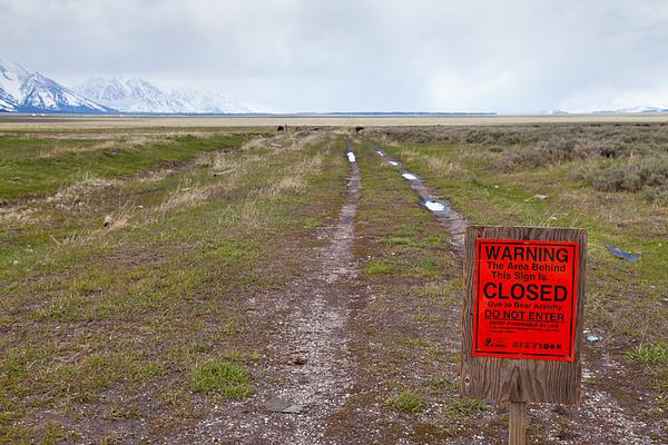 Bear Activity Notice At Grand Teton Photograph by Amit Basu Photography