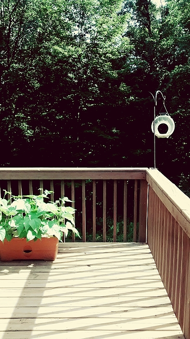 Bird Feeder Hanging On Railing At Patio Photograph by Nadia Fall / EyeEm