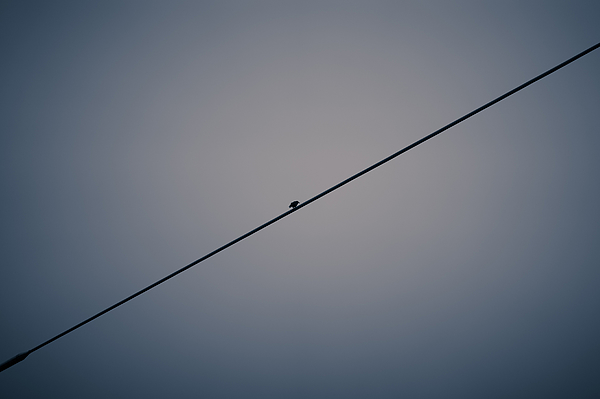 Bird Perching On Power Line Photograph by Harry Fodor / EyeEm