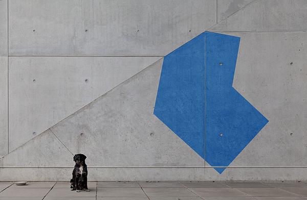 Black Dog And Blue Shape Photograph by Christian Beirle González