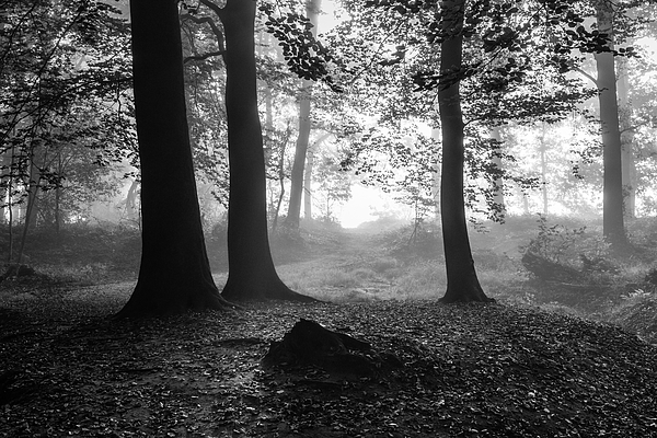 Blinding Fog Silhouettes Photograph by William Mevissen