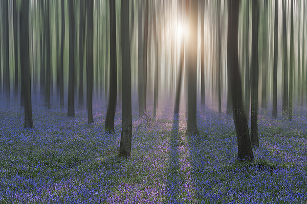 Bluebell Woods Photograph by Graham Custance Photography