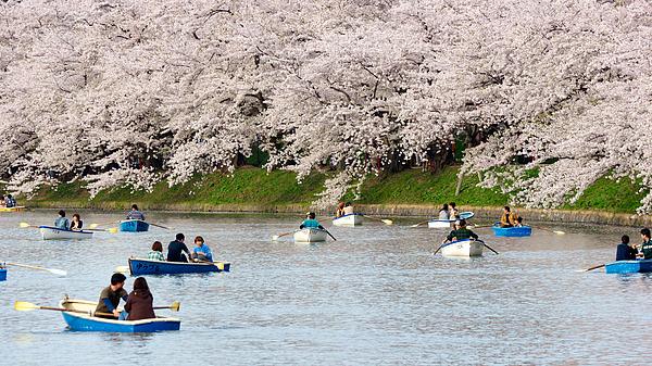 Boaters at Hirosaki Castle Moat for Hanami Photograph by Tsiu Weng Quek