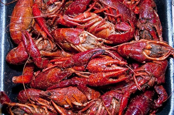 Boiled Crawfish in Pan Photograph by M Timothy OKeefe