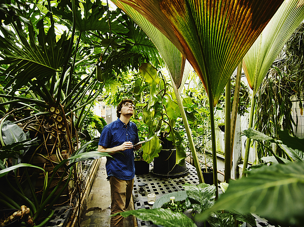 Botanist in greenhouse with digital tablet Photograph by Thomas Barwick