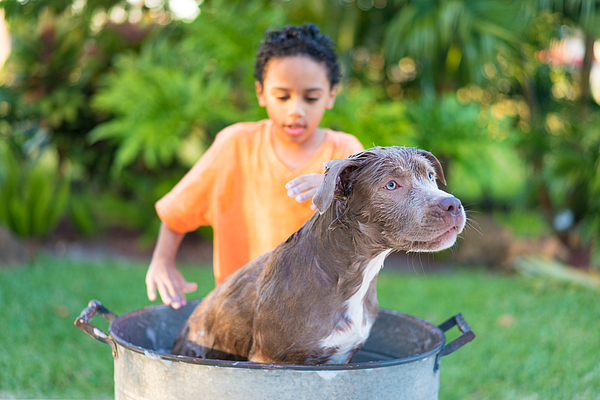 Boy bathing his dog Photograph by Thepalmer