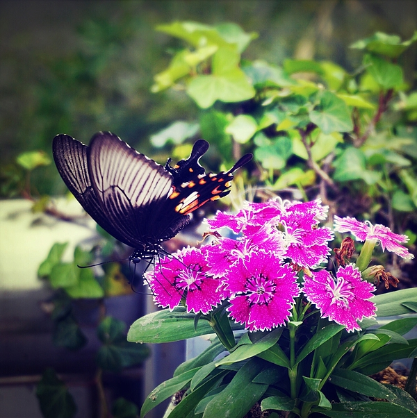 Butterfly On Flower Photograph by Zhao Wall / EyeEm