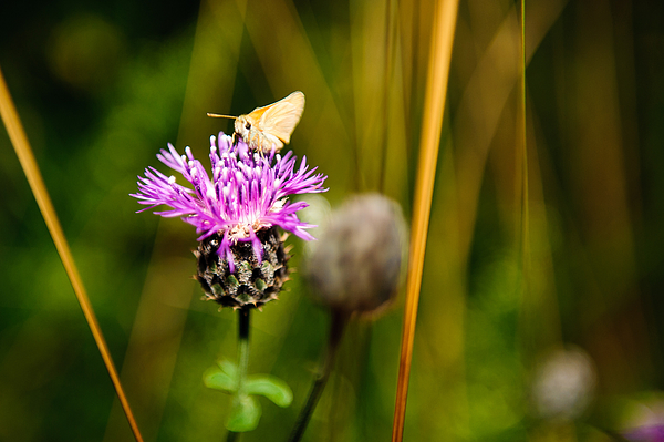 Butterfly Pollinating On Pink Flower At Park Photograph by Piotr Hnatiuk / EyeEm