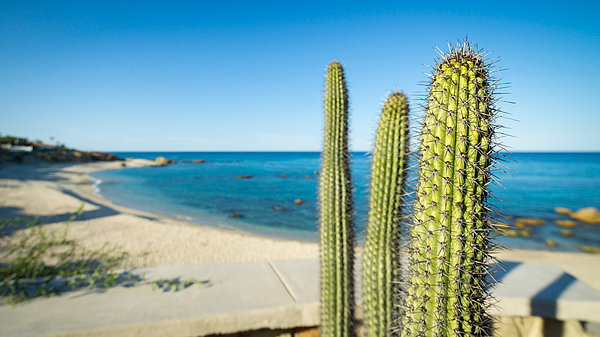 Cactus Plants Growing Against Sea On Sunny Day Photograph by Jesse Coleman / EyeEm