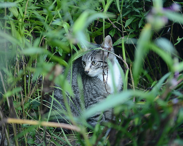 Cat Hiding In Bush Photograph by Philippe Intraligi / EyeEm