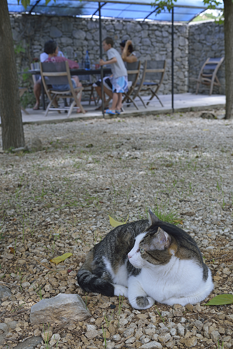 Cat lying in garden Photograph by Sami Sarkis