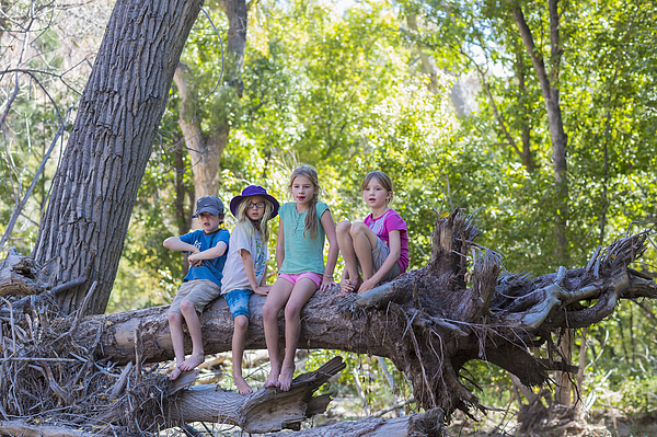 Caucasian children sitting on tree root in forest Photograph by Marc Romanelli